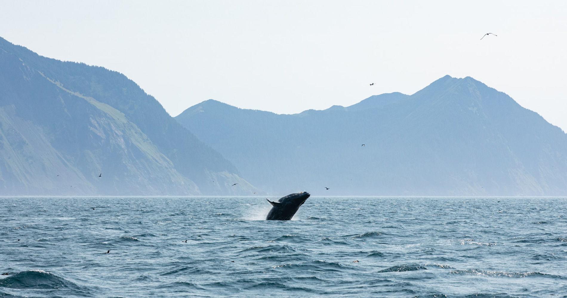 ALASKAN OCEAN CHARTERS OUT OF SEWARD AND HOMER